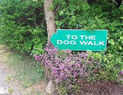 To the dog walk!