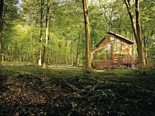 Blackwood Forest Lodges 1