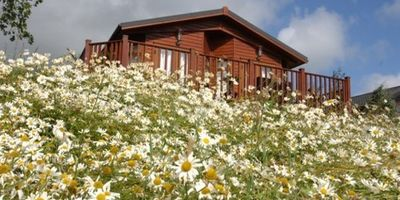 Picture of Blossom Hill Holiday Park, Devon, South West England