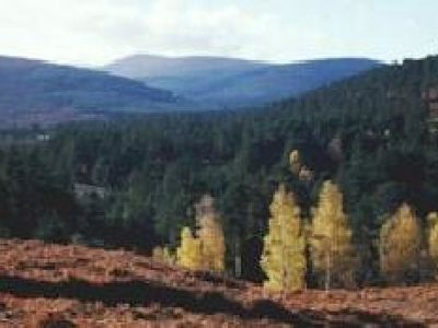 Picture of Glen Tanar Estate, Aberdeenshire