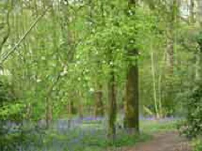 Picture of Honeybridge Park, West Sussex